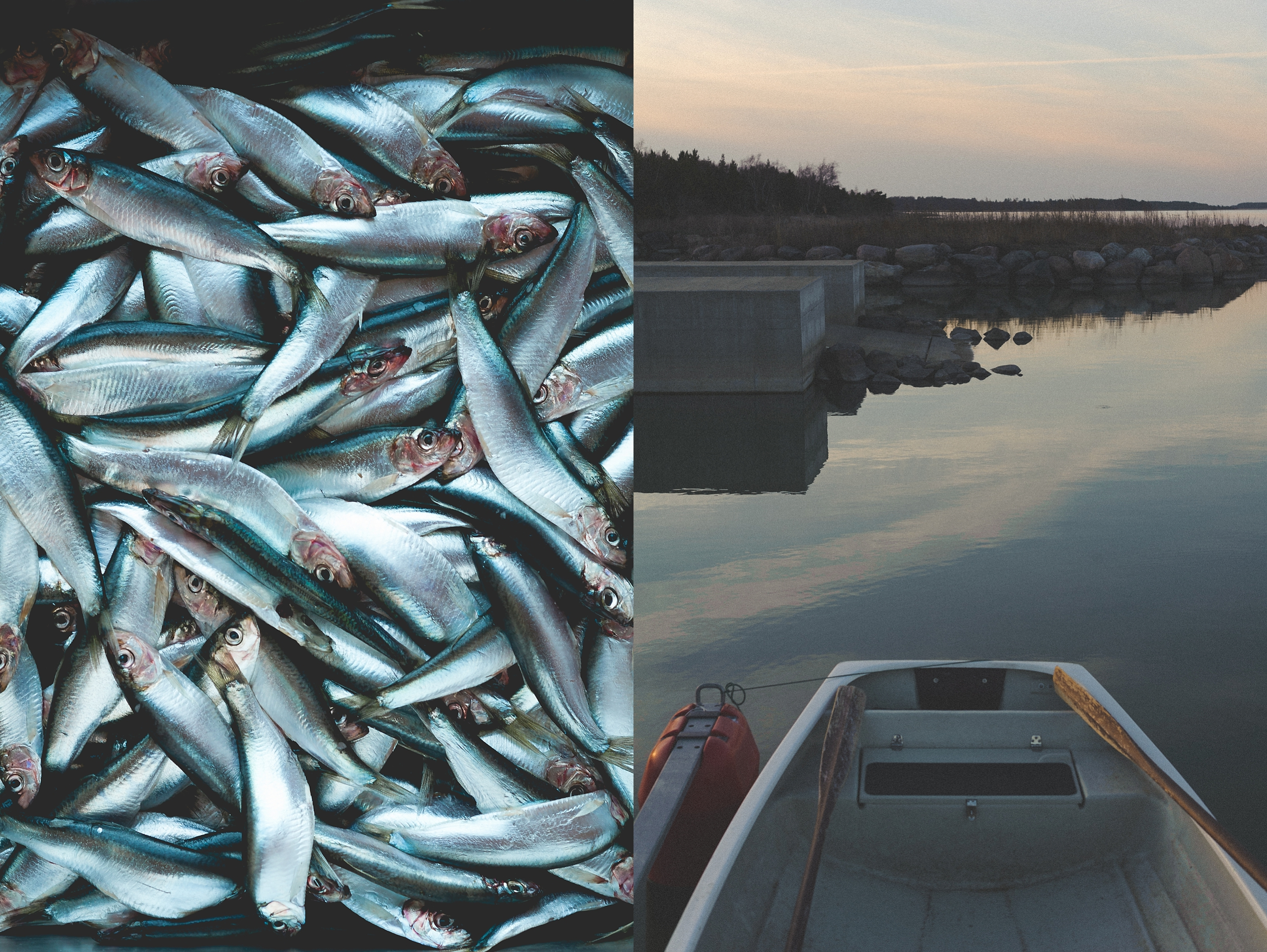 kalaraamat2-262-2_WEB