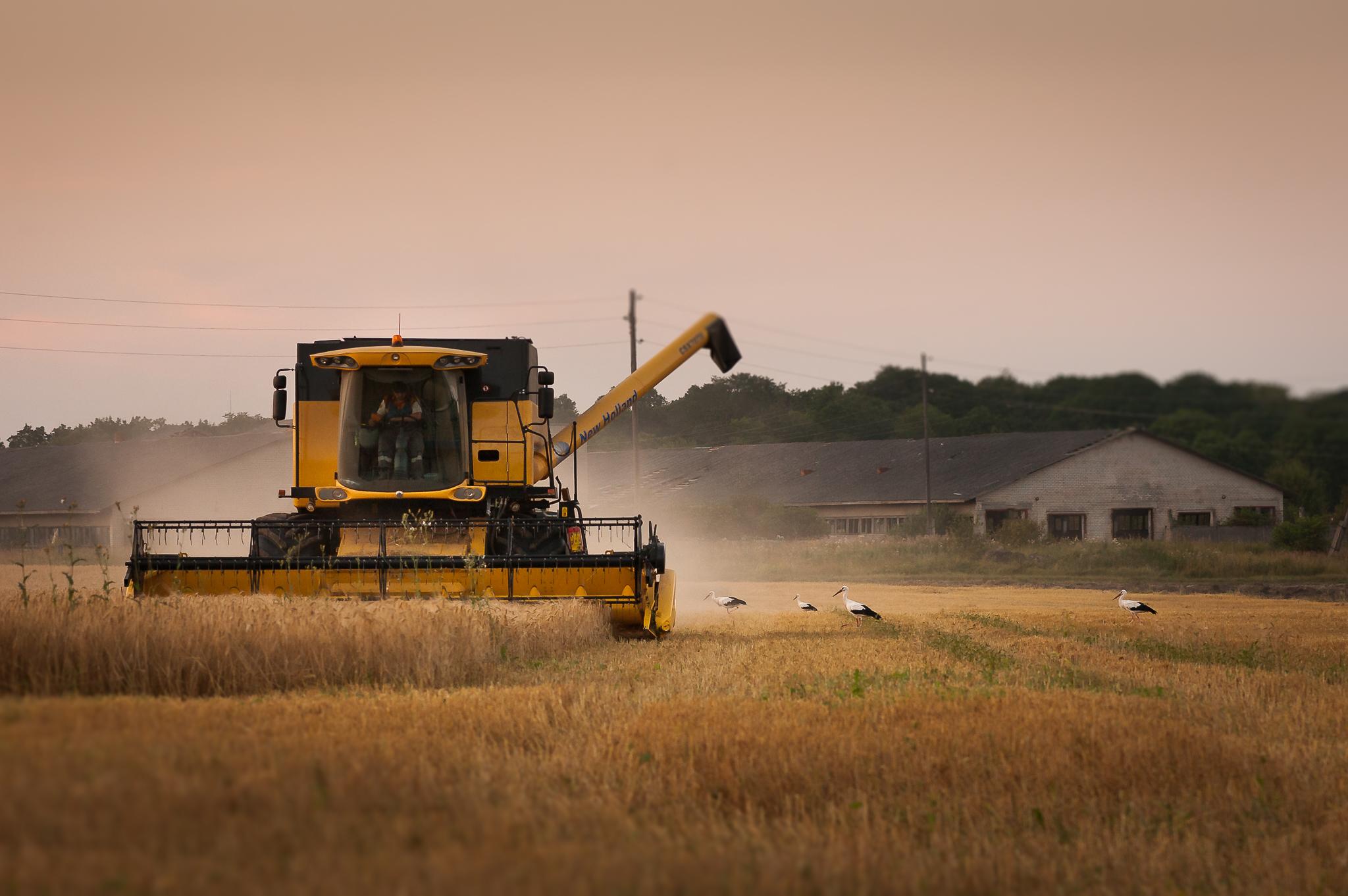 """ALT=""""kombain, viljakoristus, eesti, põllumajandus, toidu tootmine, väiketootja, fotograaf katrin press, toidufotograafia"""""""