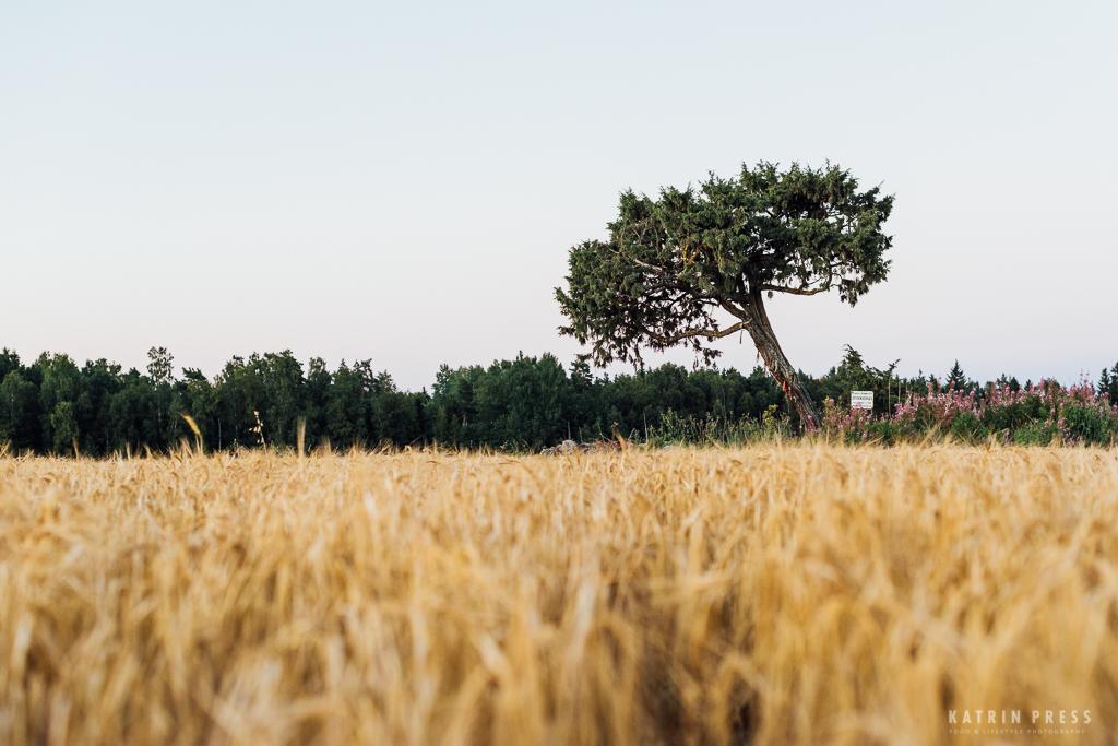 family_katri_press_fotograaf_perepilt_tree_field